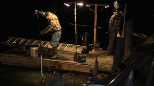 Maine's Elver Fishery