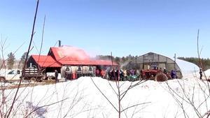 Goranson Farm, Maine Maple Sunday