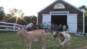 Goat farming at Sunflower Farm Creamery