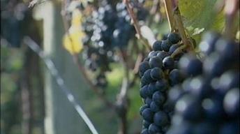 Our Ohio: Ohio River Wines