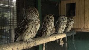 Wilmington Wildlife Refuge/The Saint James Hotel