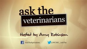 Ask the Veterinarians