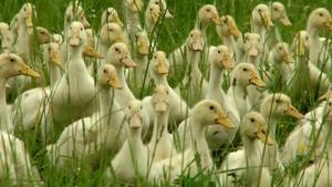 Geoff Luck; Free Union Grass Farm (#1001)