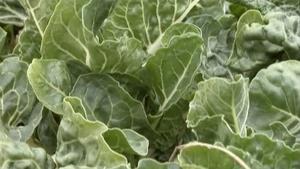 March (#1401): Vegetable Gardening; Spring Rose Care