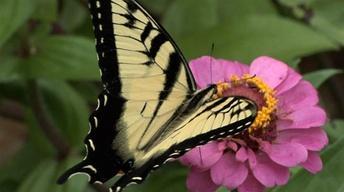 Butterfly Garden, Ornamental Grasses & Seasonal Lawn Care
