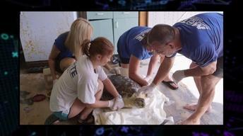 211: Sea Turtle Nesting Season