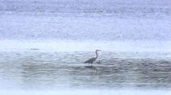 Marsh and Swamp