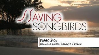 Saving Songbirds | Goodbye Jamaica