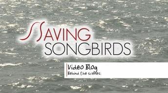 Saving Songbirds | Off to Jamaica