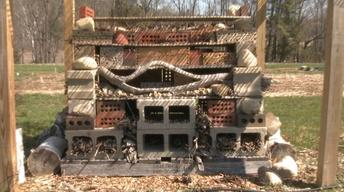 UNH-COLSA/Tuttle series | Bee Hotel