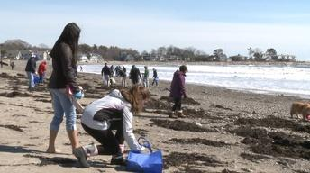 UNH-COLSA/Tuttle series | Beach Cleanup