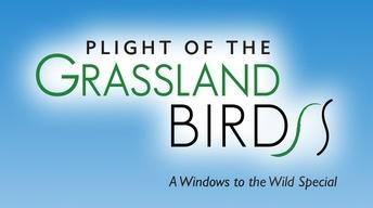 Plight of the Grassland Birds (Preview)