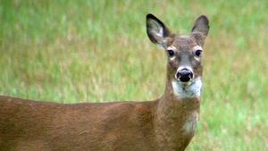 Deer Hearing - 2015