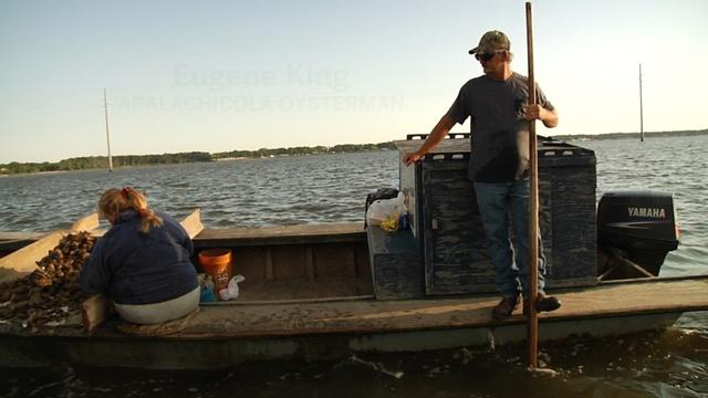 The Apalachicola Oyster in 2016   A Long Road to Recovery