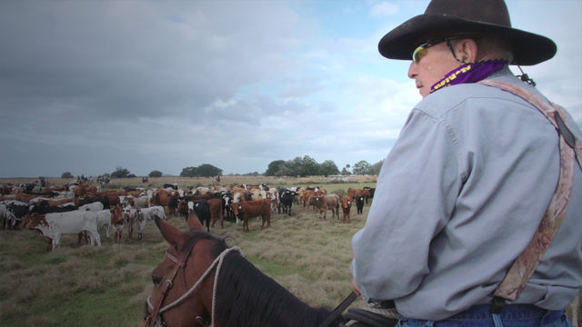 Have Camera, Will Ride!  The Great Florida Cattle Drive.