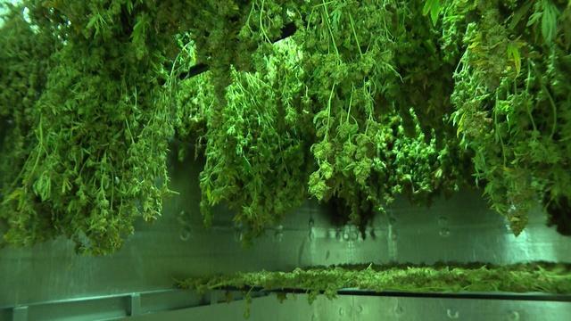 Behind the Scenes with Medical Marijuana