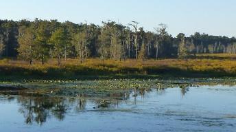 Florida Footprints: A Feral Land  (1704-1845)