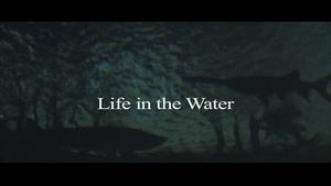 Life in the Water