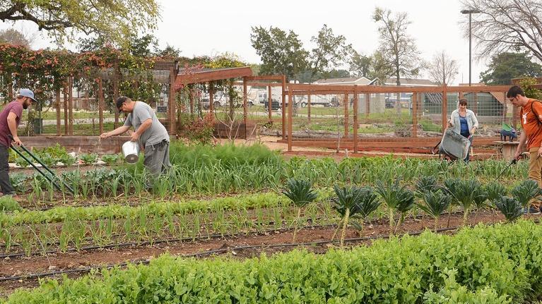 Central Texas Gardener: Healing Gardens for the Formerly Homeless