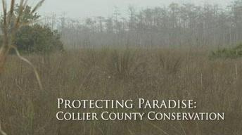 Protecting Paradise: Conserving Collier County