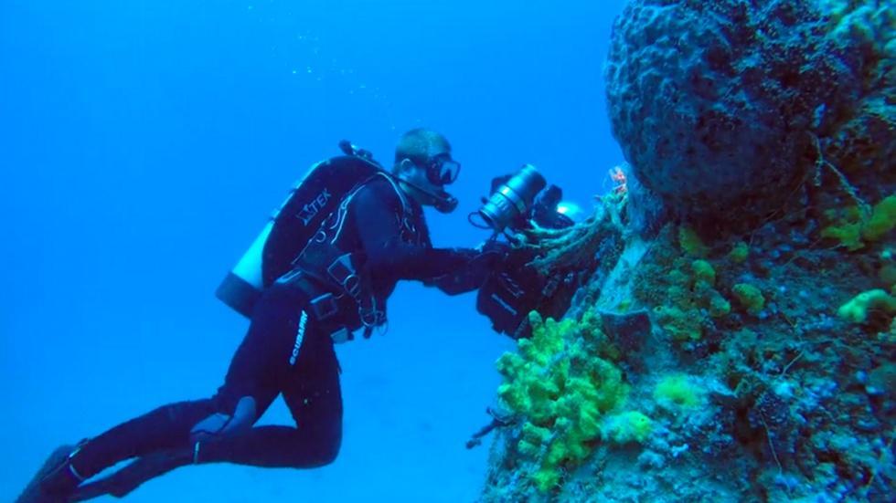 Paradise Reef image