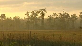 Edge of the Everglades: Big Cypress National Preserve