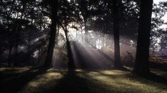 Wildwood: Land as Good as Gold