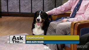 Ask The Veterinarian #1203