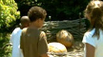 The Tyler Arboretum