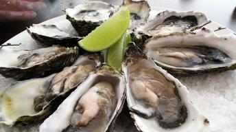 Oysters: Conception to Consumption