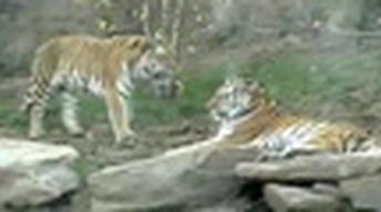Philadelphia Phirsts: Philadelphia Zoo