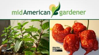 Mid-American Gardener with Dianne Noland February 16, 2017