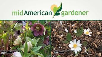 Mid-American Gardener with Dianne Noland April 13, 2017