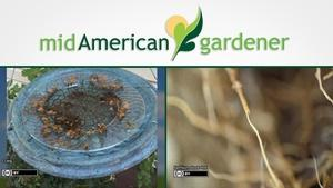 Mid-American Gardener with Dianne Noland April 20, 2017