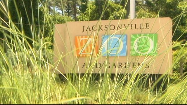Video Jacksonville Zoo And Gardens Watch Picture This