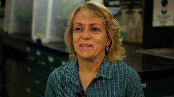 Mary Hausbeck - University Distinguished Professor