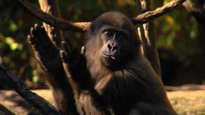 Zoo Animal Babies and Horseshoeing