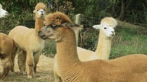 Alpacas, Rock Climbing, and More