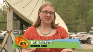 Container Gardening and Landscape Planning