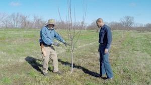 Lettuce & Pruning Apple Trees