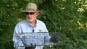 Birdhouses and Live Animal Traps