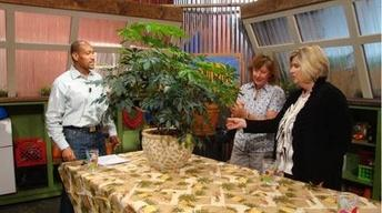 The Family Plot: Repotting Houseplants