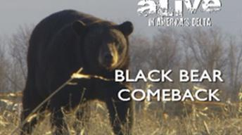 Alive! In America's Delta - Black Bear Comeback Preview