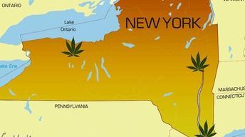 Innovation Trail | Battle for Medical Marijuana Sites