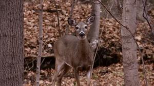 Deer Population Control