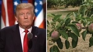 Republican National Convention; Lack of Pollinators