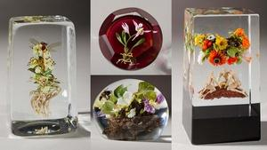 Paul Stankard Glass at the Akron Art Museum