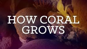 How Coral Grows