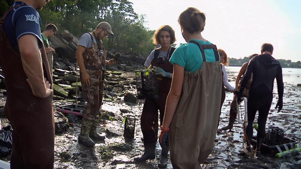 Restoring Oysters to Protect Us From Future Storms image