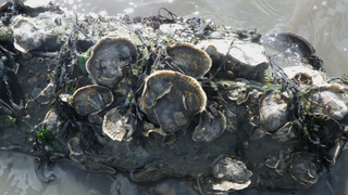 9/4: Oysters, Supreme City, NYRP, Special Olympics
